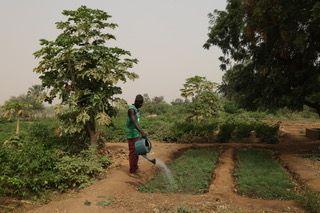 Serge Boulaz, février 2020. Arrosage des planches de pépinière d'oignon. Doundé, commune de Bakel, Sénégal