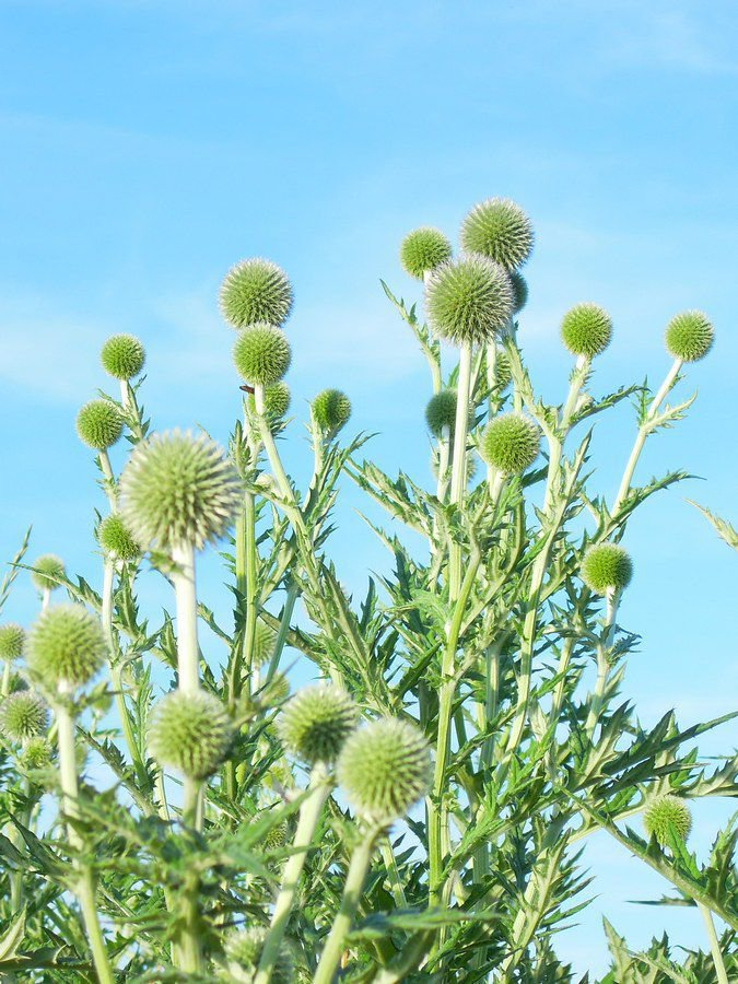 Le jardin en fleurs :: Les Jardins de Cocagne