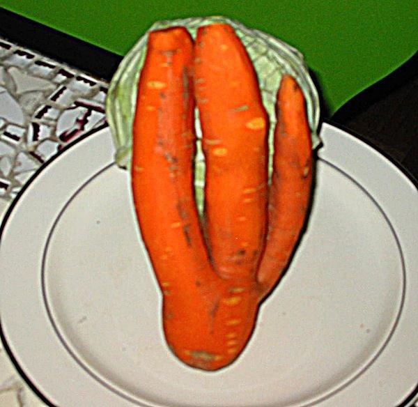 carottetrident.jpg