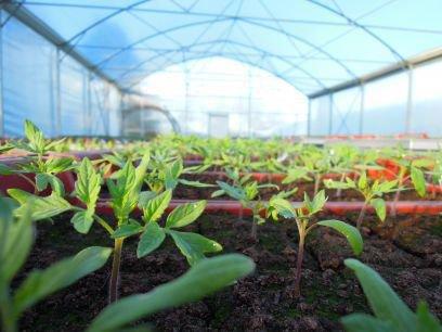 serresplantons.jpg